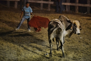 bulls06small