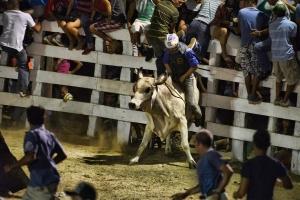 bulls10