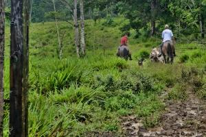 horsesrideawaysmall